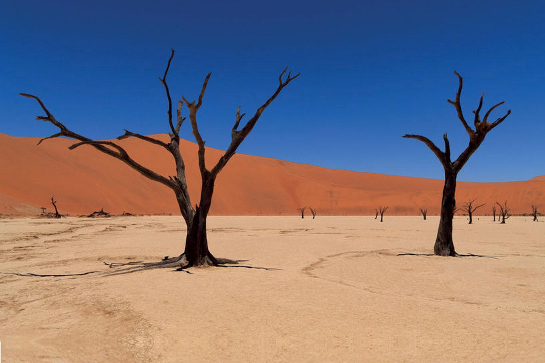 Safari Namibie Samsara Voyages