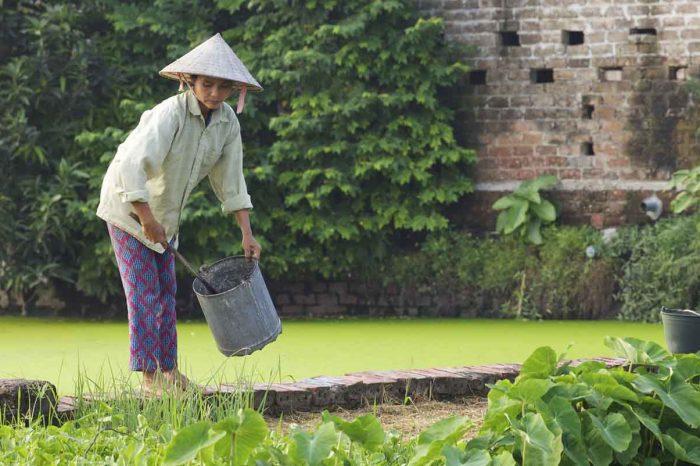 Voyage au Nord Vietnam : Au Fil des Eaux