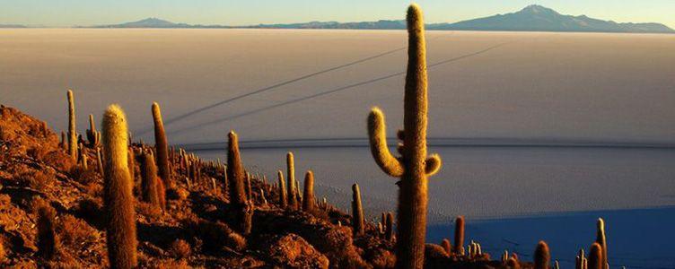 Ile du salar d'Uyuni en Bolivie