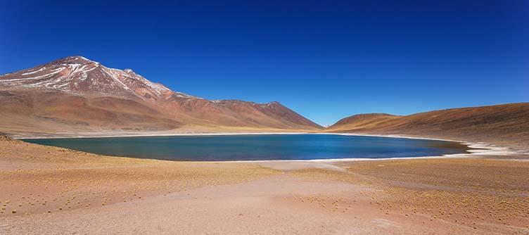 Miniques dans le désert d'Atacama