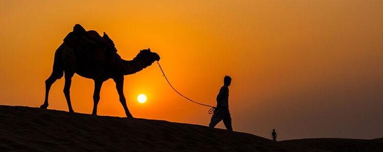 Dromadaire au coucher de soleil, Jaïsalmer