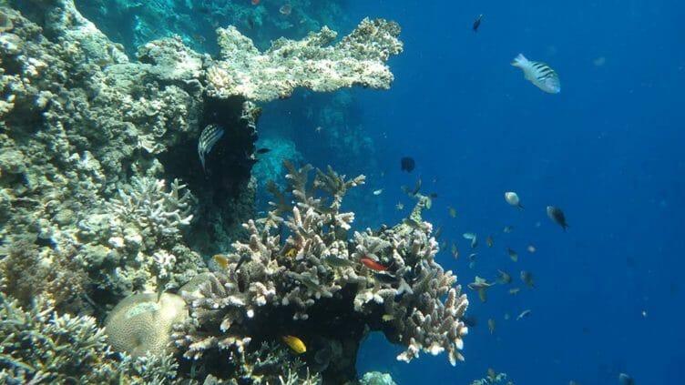 Snorkeling à Lovina, Bali avec Samsara Voyages