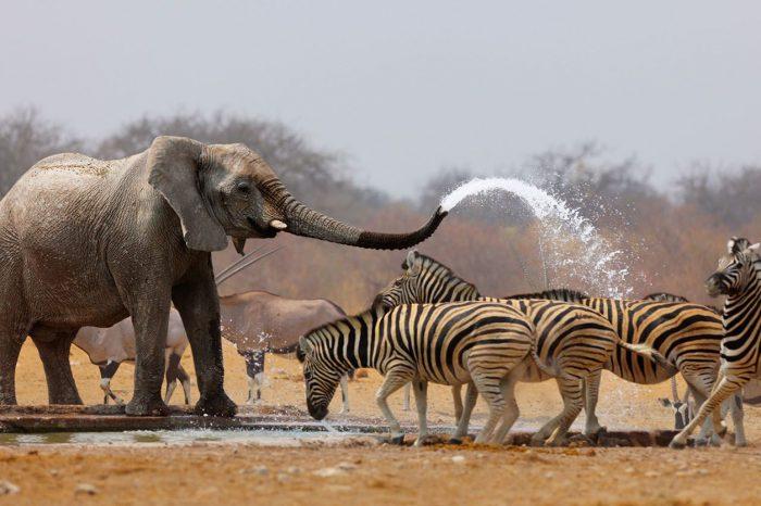 Voyage Safari Namibie et Chutes Victoria