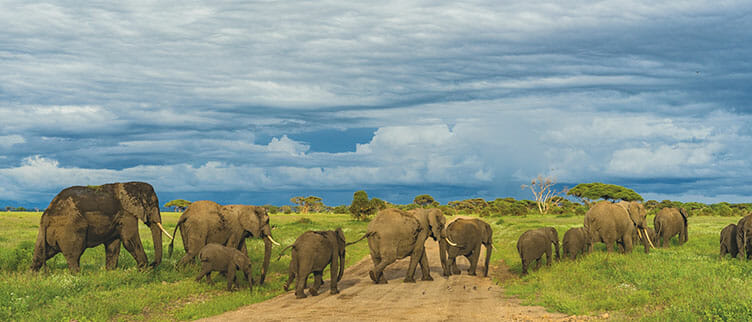 Eléphants en safari en Tanzanie