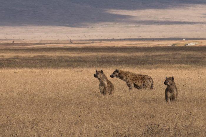 Safari Tanzanie Essentielle