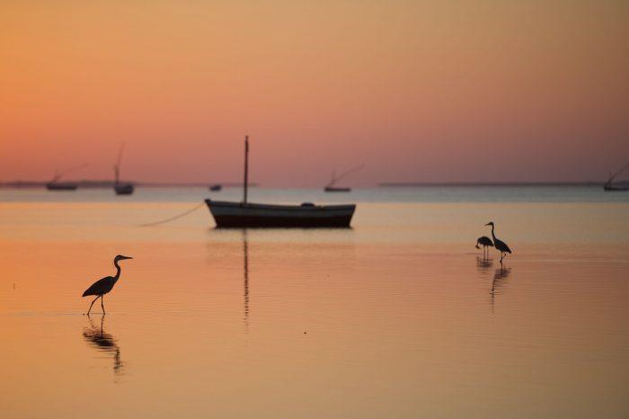 Safari en Afrique du Sud et Mozambique