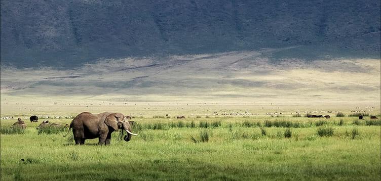 En safari dans le cratère du Ngorongoro