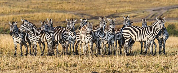 En safari à Tarangire, Tanzanie