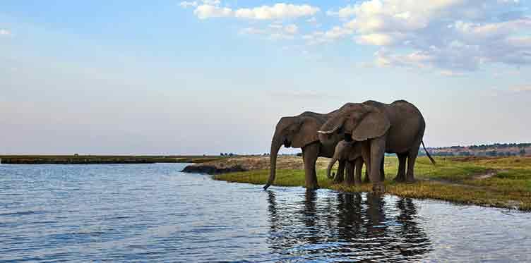 elephants a chobe lors de votre voyage au botswana
