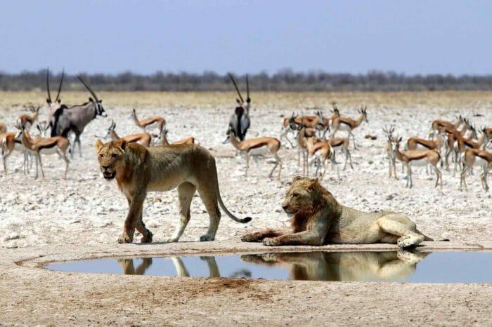 Voyage Namibie Chutes Victoria Confort