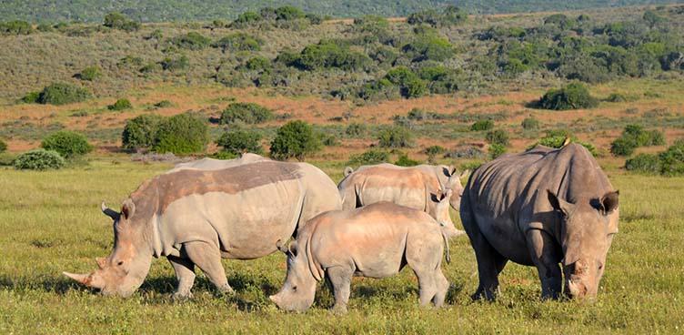 Rhinoceros à Khama Rhino Sanctuary