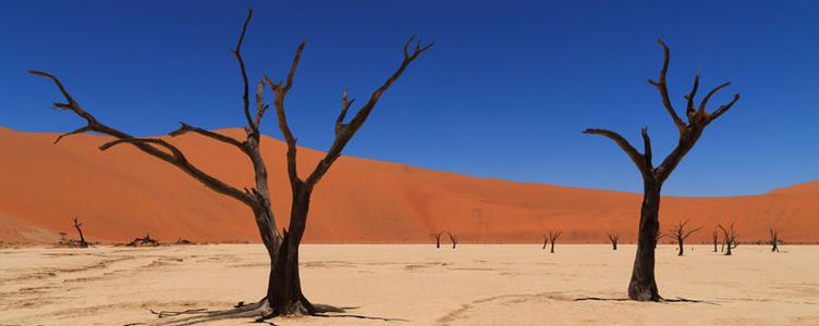Arbres à Dead Vleï en Namibie