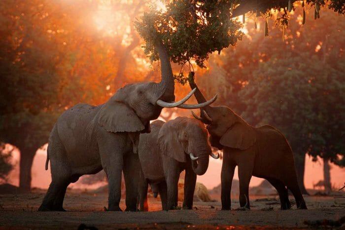 Voyage Parc Kruger Zimbabwe Botswana Confort