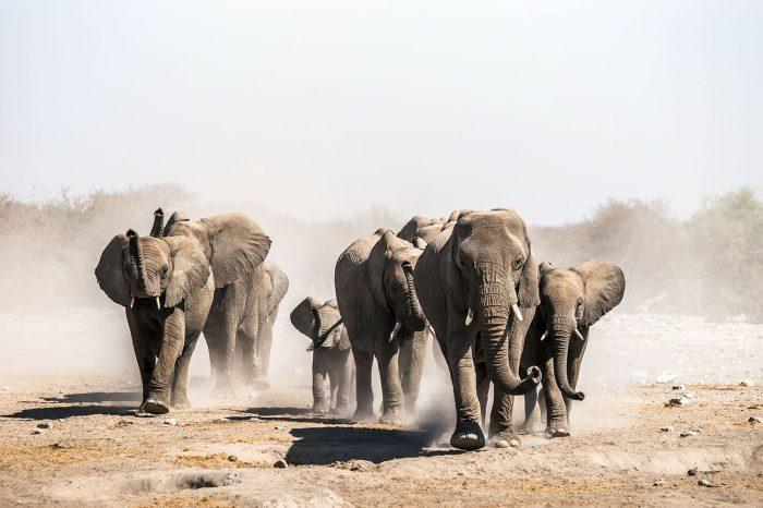 Voyage du Cap aux Chutes Victoria – Afrique du Sud, Namibie et Botswana