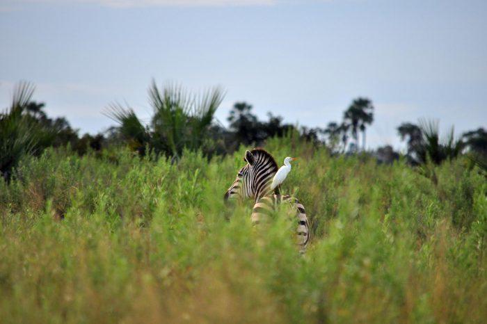 Safari Botswana et Zimbabwe
