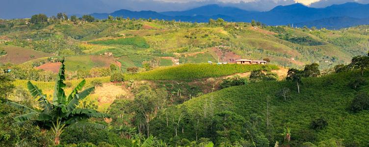 Plnatation de café en Colombie Samsara Voyages