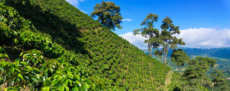 Paysage à Menizales, Colombie