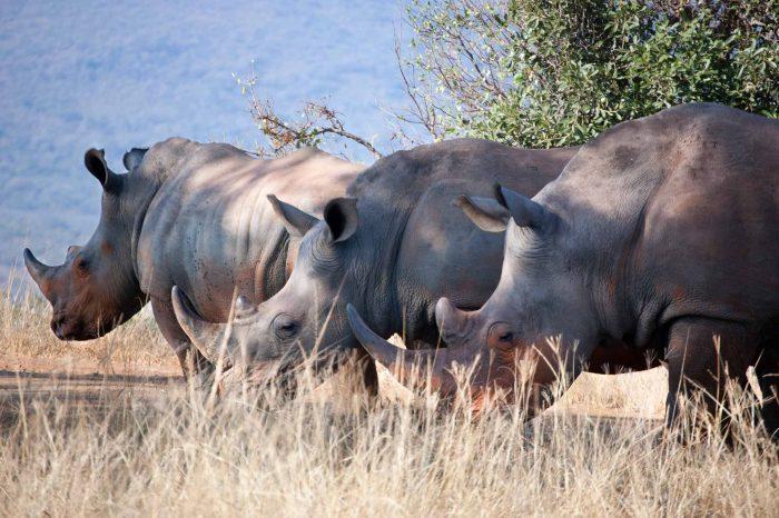 Voyage Zimbabwe, Botswana et Kruger Campement