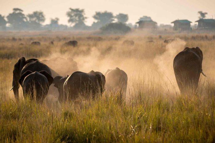 Voyage Namibie, Botswana et Chutes Victoria
