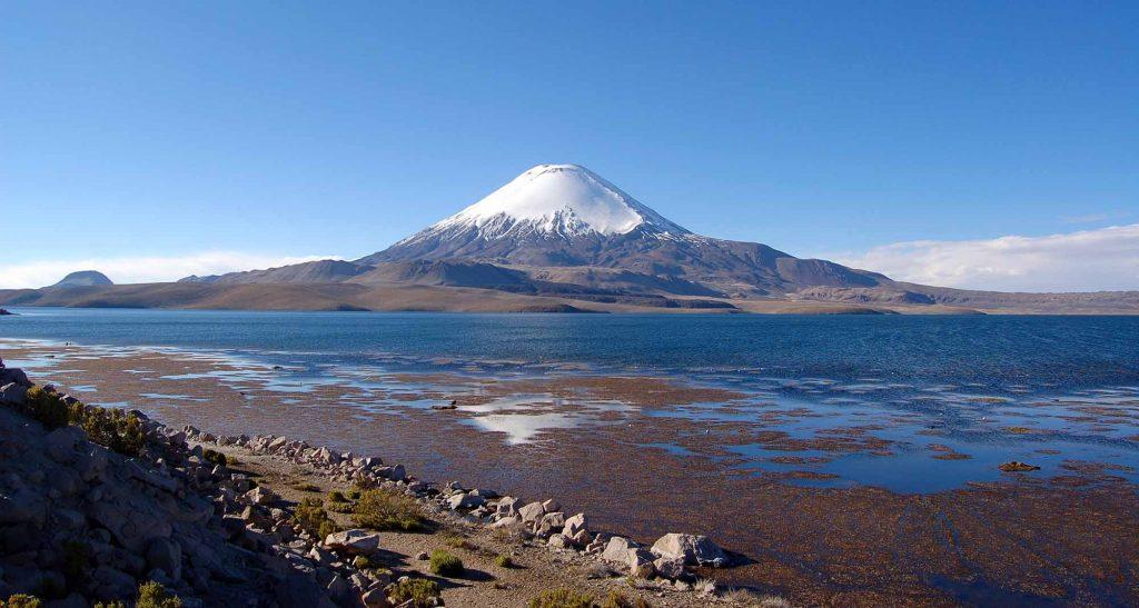 Vouahe au Chili Parc de Lauca