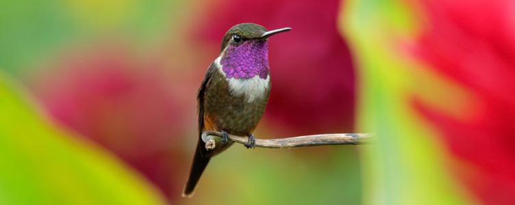 Oiseau à Medellin en Colombie