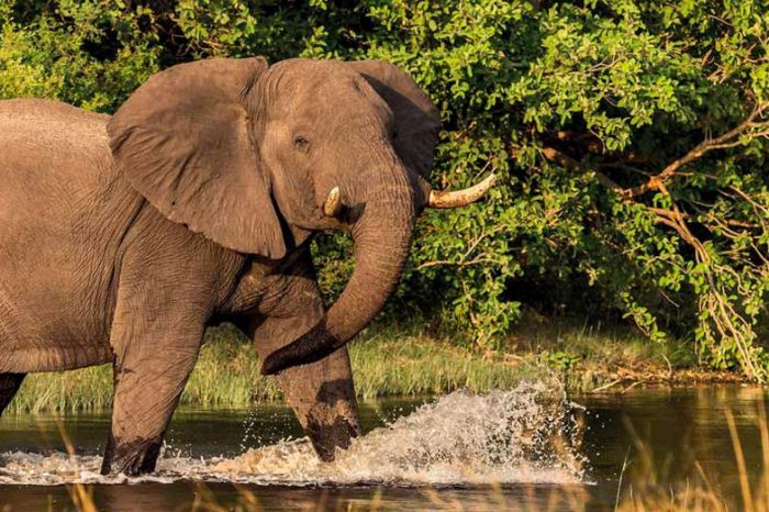 Safari Botswana et Chutes Victoria