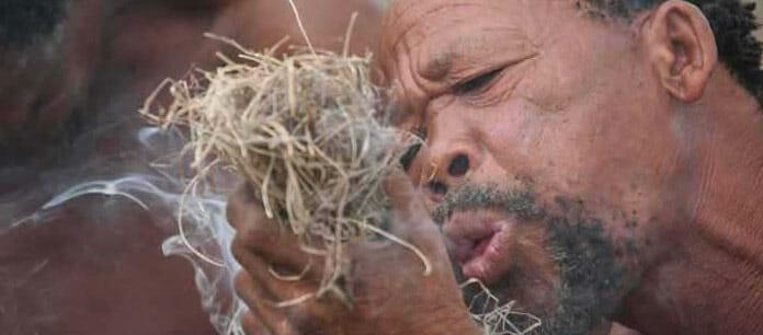 bushmen dans le kalahari