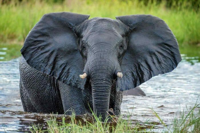 Voyage Botswana et Chutes Victoria Camping