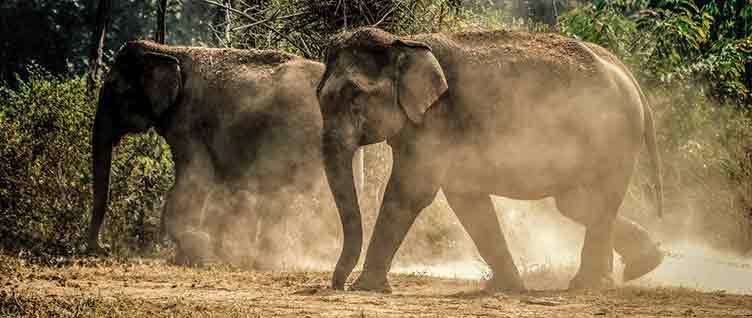 Elephants à Hwange au Zimbabwe