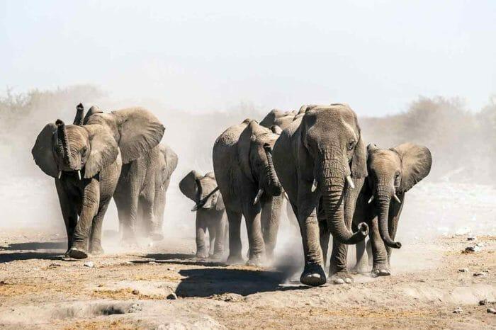 Voyage Cap aux Chutes Victoria, Namibie et Botswana Confort