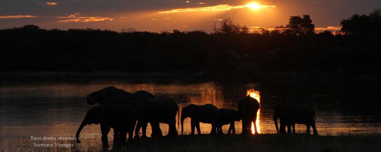 Eléphants à Hwange au Zimbabwe