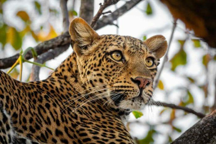 Voyage Zambie et Malawi Camping