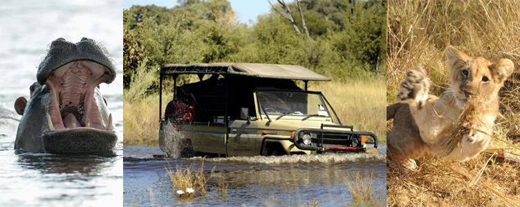 Voyage au Botswana, dans le Delta de l'Okavango