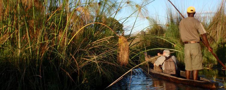 En mokoro dans le delta de l'Okavango au Botswana