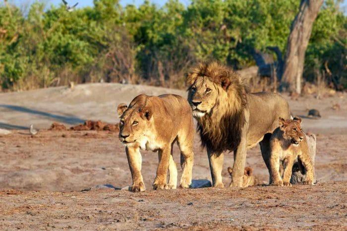 Voyage Namibie Botswana et Chutes Victoria Camping