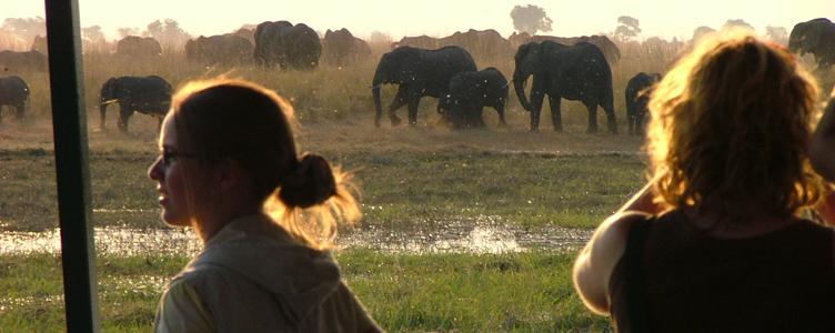 Safari en bateau sur la rivière Chobe
