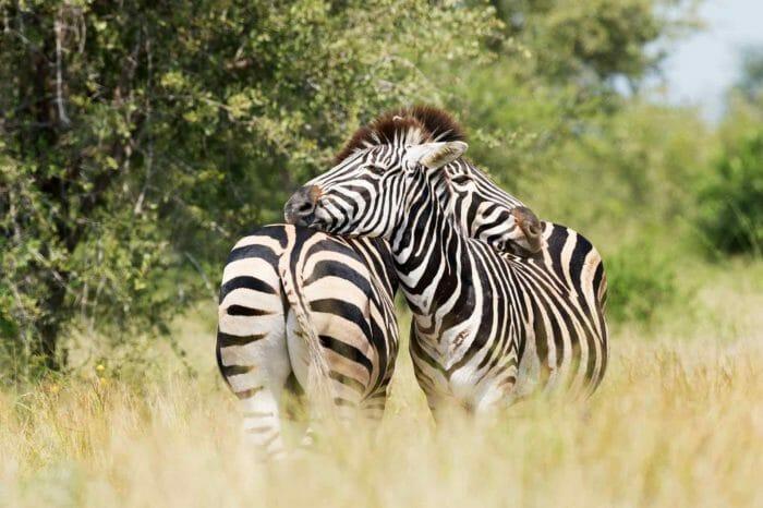 Voyage Zimbabwe Botswana Parc Kruger Camping