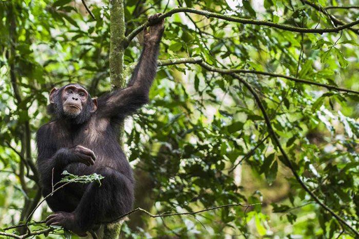 Voyage en Ouganda : Safari Faune et Grands Espaces d'Afrique