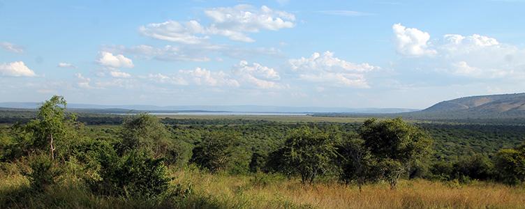 Le Parc Mburo lors d'un voyage en Ouganda