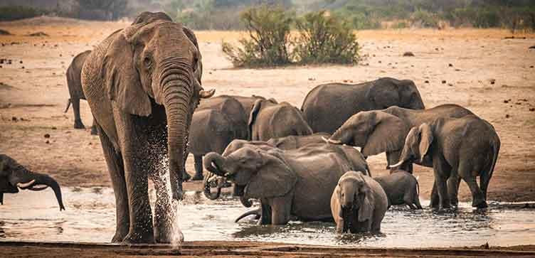 Elephants à Hwange