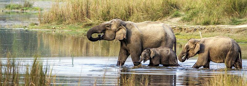 Eléphaats en safari à Chitwan