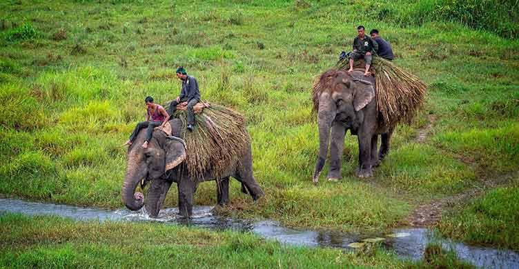 Elephants à Chitwan dans le Teraï