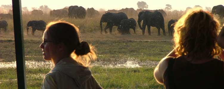 Croisière safari sur la rivière Chobe