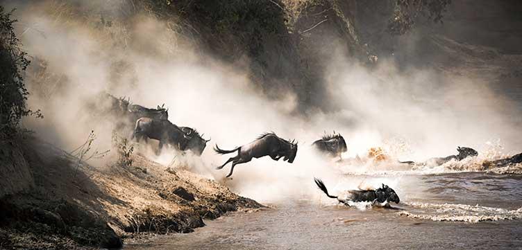 La grande migration au Kenya