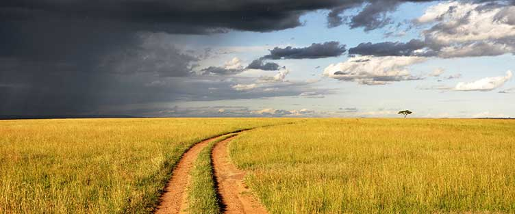 Paysage du Masai Mara