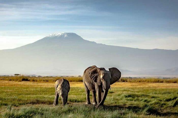 Safari Kenya Essentiel